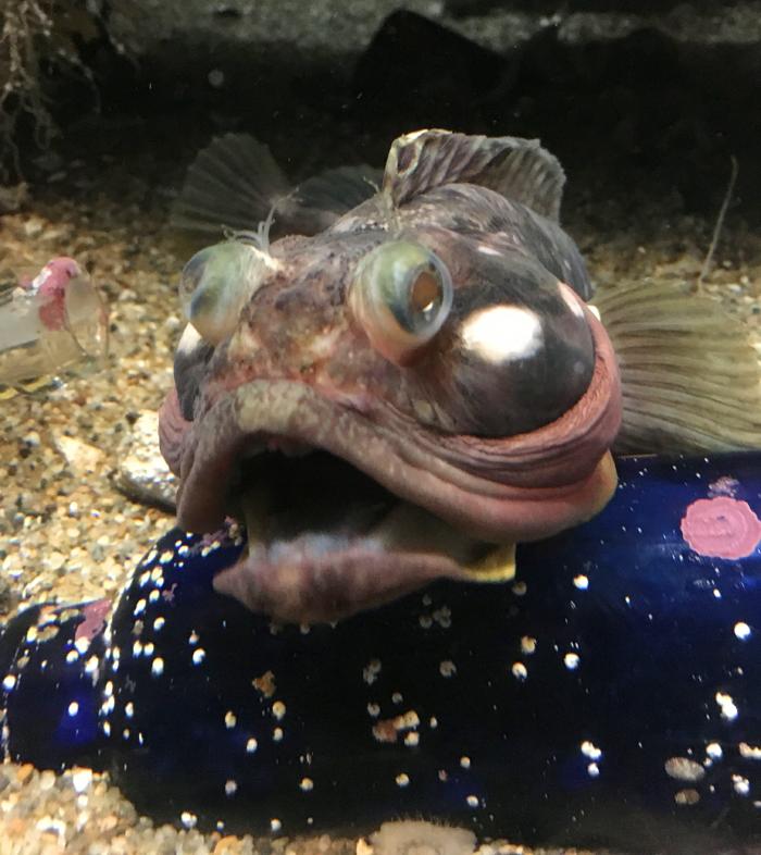 aquarium5