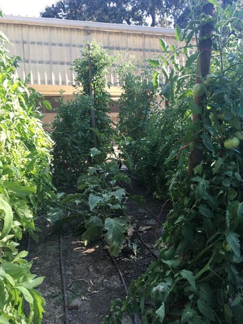 oak farm garden 2