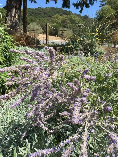 gun-bun-lavender